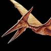 PteranodonSays
