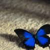 krylon_blue