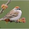 SparrowClef
